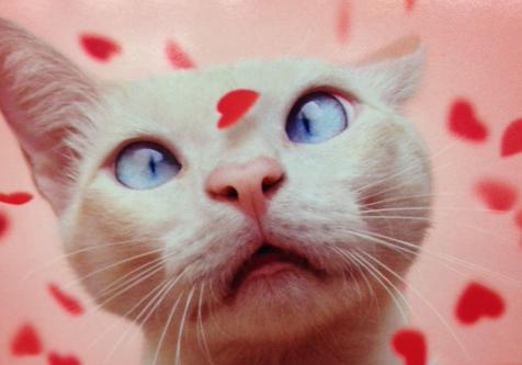 cat-valentine-sphynx-cute-kitty